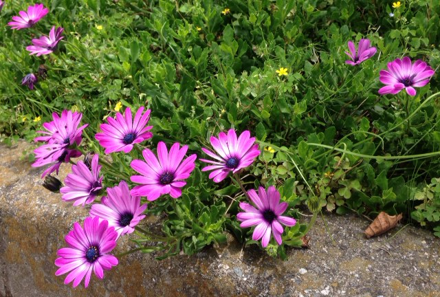 板野町で撮った花