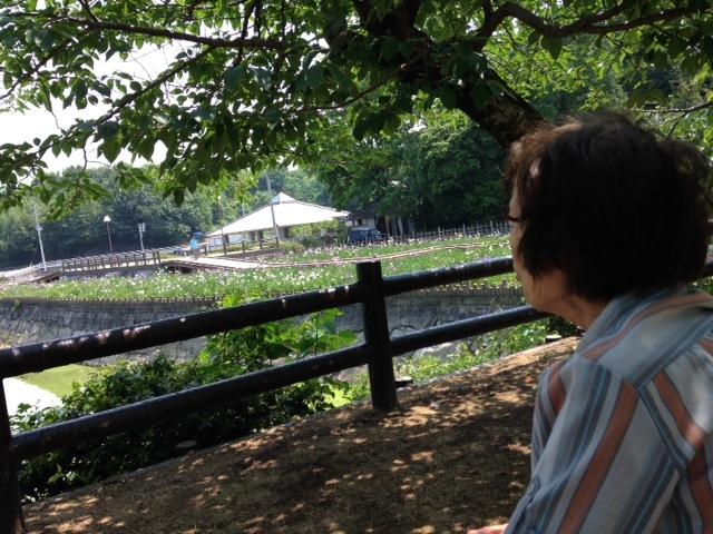 菖蒲を見る母