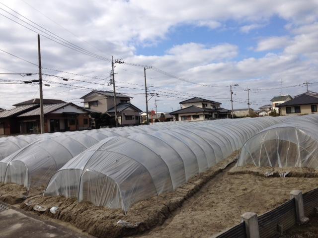 藍住町はにんじんの産地 演説をしながらビラも配布します。手塚弘司をもっともっと知ってもらわない.