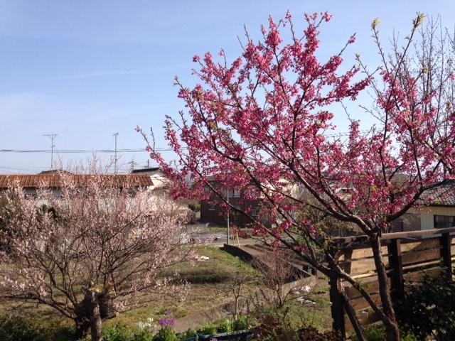 板野町羅漢できれいに咲いた花