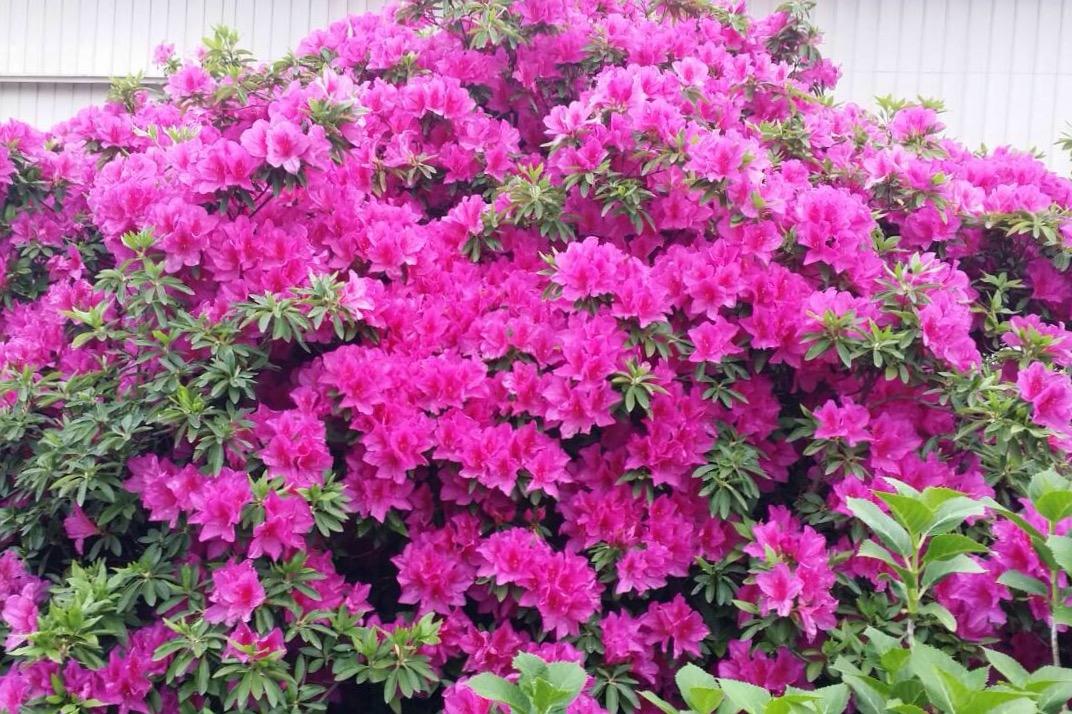 きれいに咲いた花