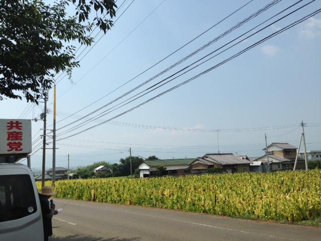 泉谷にて タバコ畑の前で