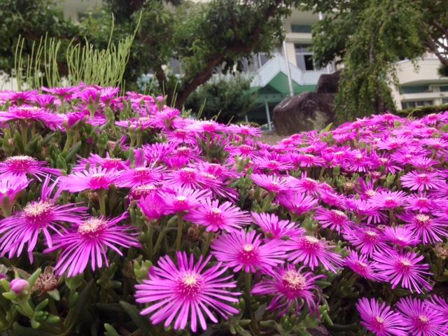 神山町役場の前に咲いた花