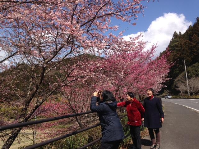 きれいに咲いていた桜をパチリ
