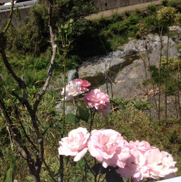 神山町にて