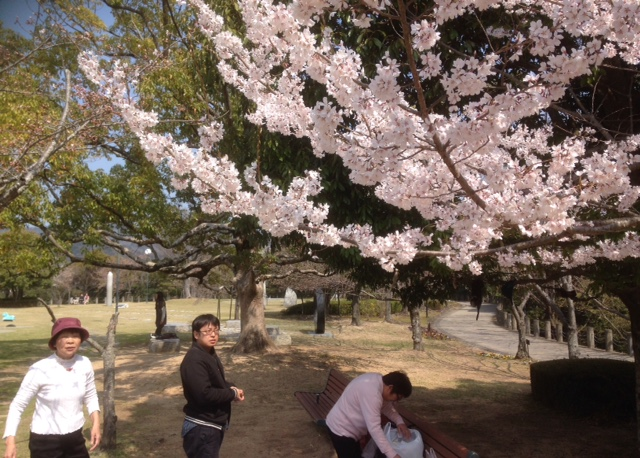 文化の森の桜