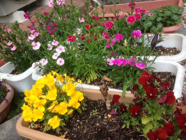 地区委員会の花