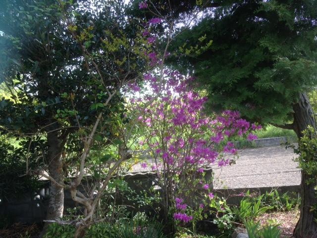 我が家の庭に咲いた・・・