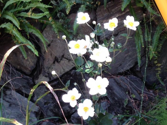 線路の脇に咲いた花